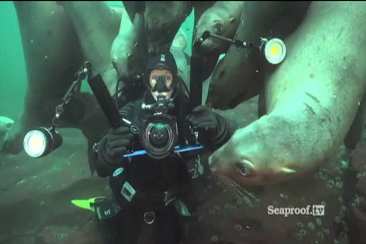 National Geographic sharing diver's encounter with sea lions off VanIsle