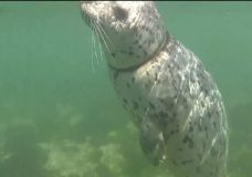 UPDATE: South Island seal finally rid of rope around its neck