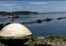 Archaeology team works with local First Nations to determine age, depth of ancient clam gardens on Vancouver Island