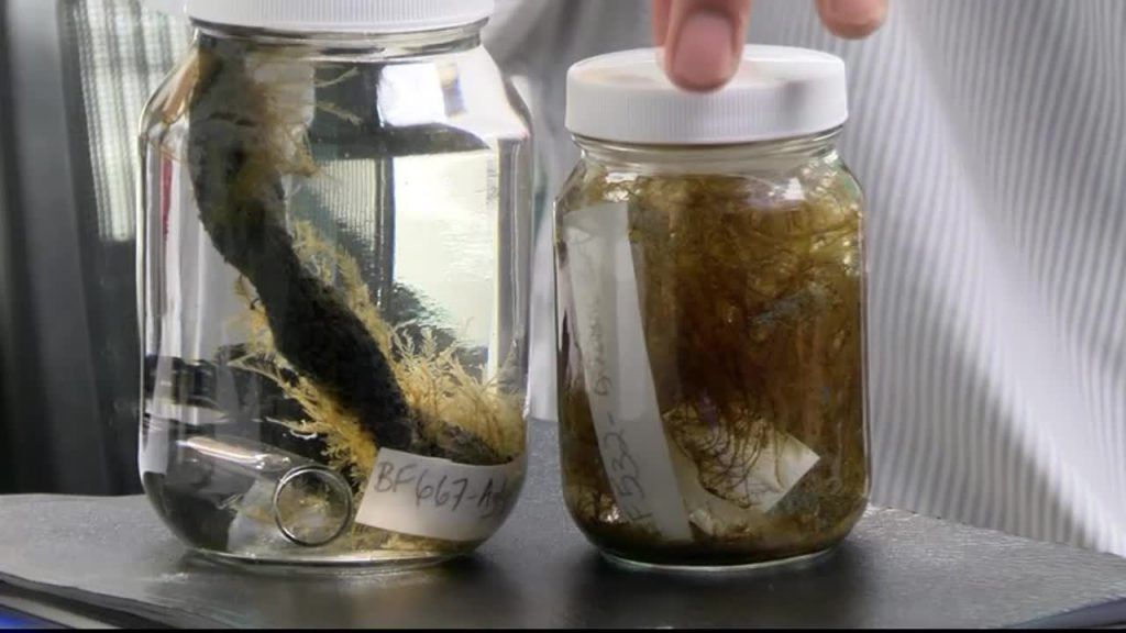 Japanese sea creatures hitch a ride to west coast after 2011 tsunami