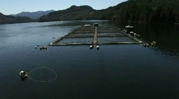Environment commissioner audit slams federal fish farm management