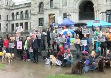 'No pets, no way': group rallies in Victoria calling for the end of pet restrictions in housing