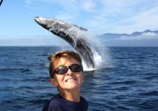 Whale of a time: Young boy poses as humpback breaches