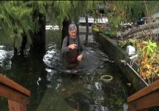 Sproat Lake homes flooded by torrential rains