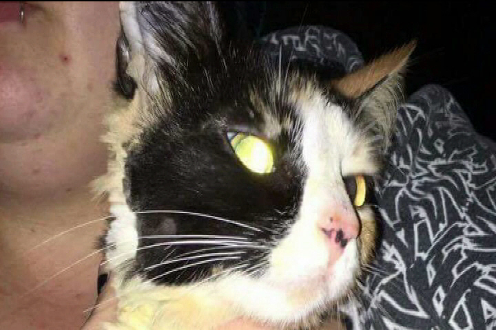 Online backlash grows after cat is abused in Duncan