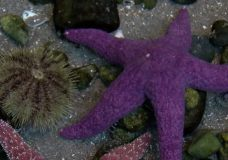 Sea star die-off: 'It may be the largest wildlife mortality event in recorded history'