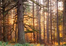 Province reduces annual allowable cut for Arrowsmith Timber Supply Area