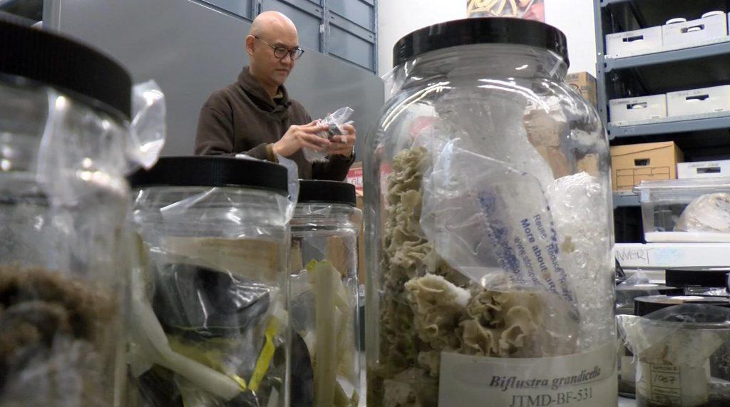 2011 Japan tsunami animal collection now resides at the Royal B.C. Museum