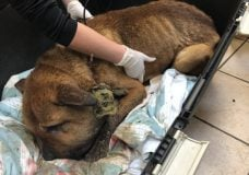 No jail time for Duncan man convicted in dog abuse case