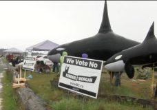 Esquimalt Lagoon demonstration against Kinder Morgan focuses on saving killer whales