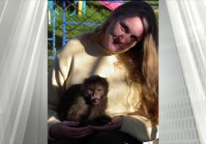 Monkey escapes enclosure to be on the loose in Cowichan