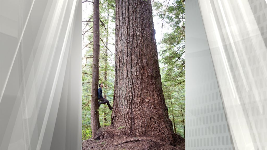 NDP under fire for allowing old growth logging near Port Alberni
