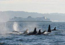 File photo (C. Emmons/NOAA Fisheries)