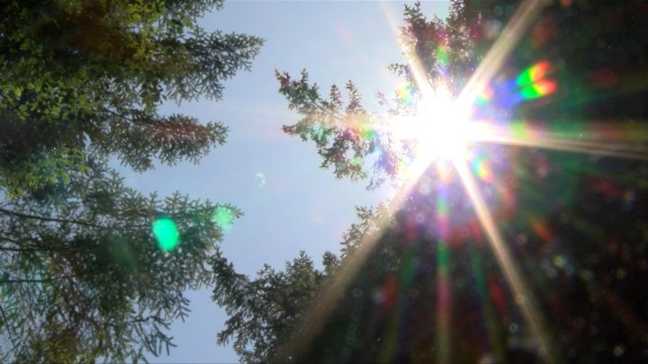 Greater Victoria could hit 37 degrees Monday as heat warning issued for much of B.C.