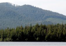 Pacheedaht First Nation and Cowichan Lake now in first of a kind forest agreement with province