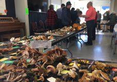 Over 120 mushroom species showcased in Cordova Bay at annual event