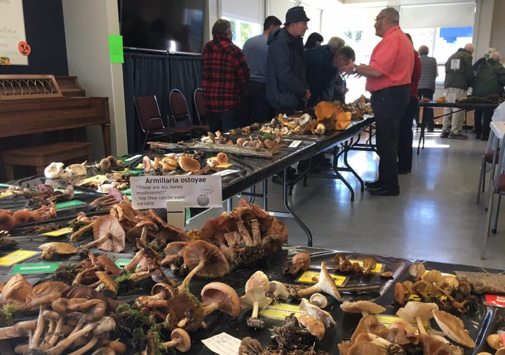 Attendees has the chance to see all the mushrooms that could be found in B.C.