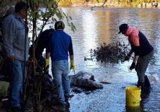 Volunteers cleanup garbage and 1000 needles by Cowichan River