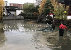 Koi rescued at Chinese garden in Vancouver; otter not seen since Saturday