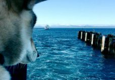 Massachusetts mayor travels to Victoria during cross-country journey with dying dog