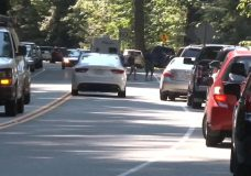 Alberni's chamber of commerce says safety upgrades through Cathedral Grove on Highway 4 overdue