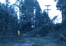 Trees and lines knocked onto almost 100% of Southern Gulf Island roads Thursday, crews making progress