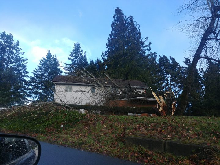 A tree down on part of a house on Rutherford Road in Nanaimo. (Amez Happier).