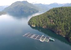 Province to announce changes to salmon farms in the Broughton Archipelago