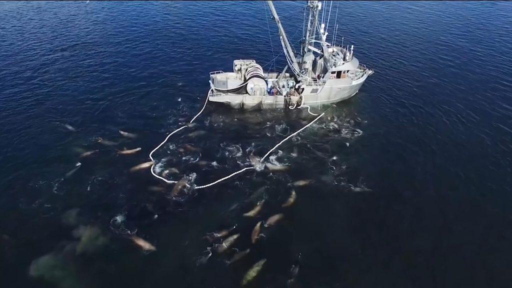 Herring catch quota in B.C.'s Georgia Strait will ensure health of species: DFO