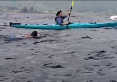Spirit Orcas will swim through the Great Bear Rainforest in July