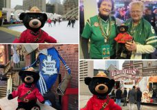 Bear outside Toronto City Hall, Bear at the Grey Cup, Bear with a Leafs jersey and Bear in downtown Toronto. (Nanaimo RCMP)