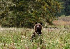 Ryan Reynolds narrates Great Bear Rainforest documentary coming to Victoria