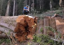 Island demonstrators call for end of old-growth logging in B.C.