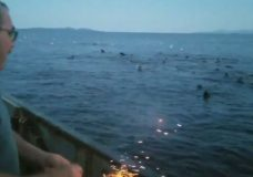 A man is seen in a Facebook video throwing an explosive toward a group of sea lions. (Thomas Sewid/Facebook)