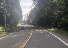 Sooke Road reopens to single-lane traffic after fallen tree forces closure