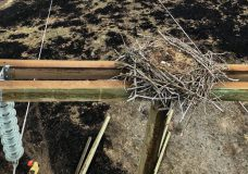 BC Hydro crews complete delicate task saving bald eagle nest atop damaged pole