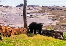 Residents near Nanaimo's Linley Valley warned to keep garbage, compost inside due to bear