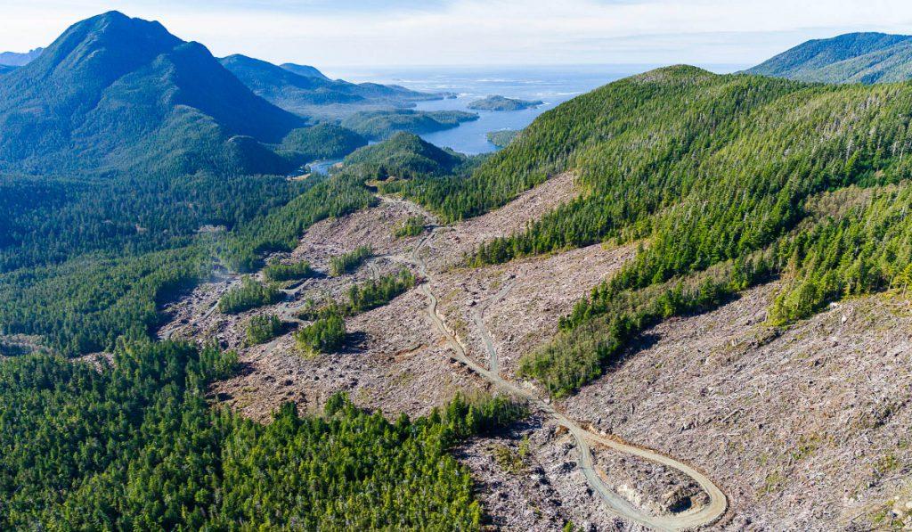 B.C. bans logging along sensitive areas of US border