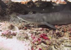 Local man works to save sharks across the globe
