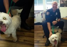 Lost dog finds its way to Sooke fire hall, reunited with owner