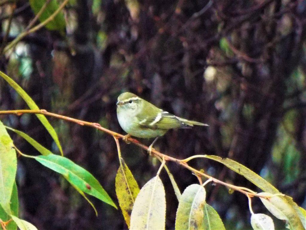 Rare bird sighting brings crowds of birding enthusiasts to Vancouver Island