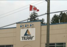Workers may join union at cannabis producer Tilray in Nanaimo