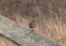 Bird species numbers down in Victoria's Christmas Bird Count