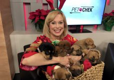 Pet CHEK: Cuteness overload with a pile of puppies dressed up for Christmas