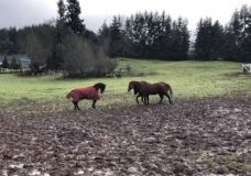 Duncan horse rescue struggles with flooding from record rainfall