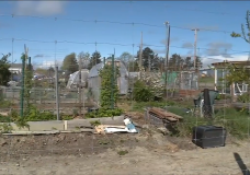 Calls to re-open Work Point community garden after sudden closure