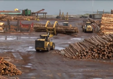 Opposition forms against proposal to temporarily change log export policy
