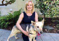 Pet CHEK: Retired sled dog Cassie needs her forever home