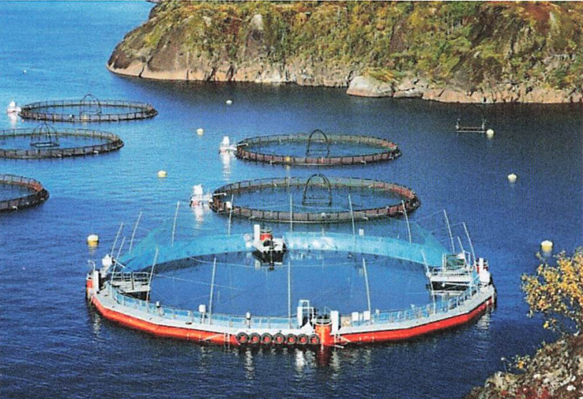 New salmon farming pen system to be deployed near Vancouver Island