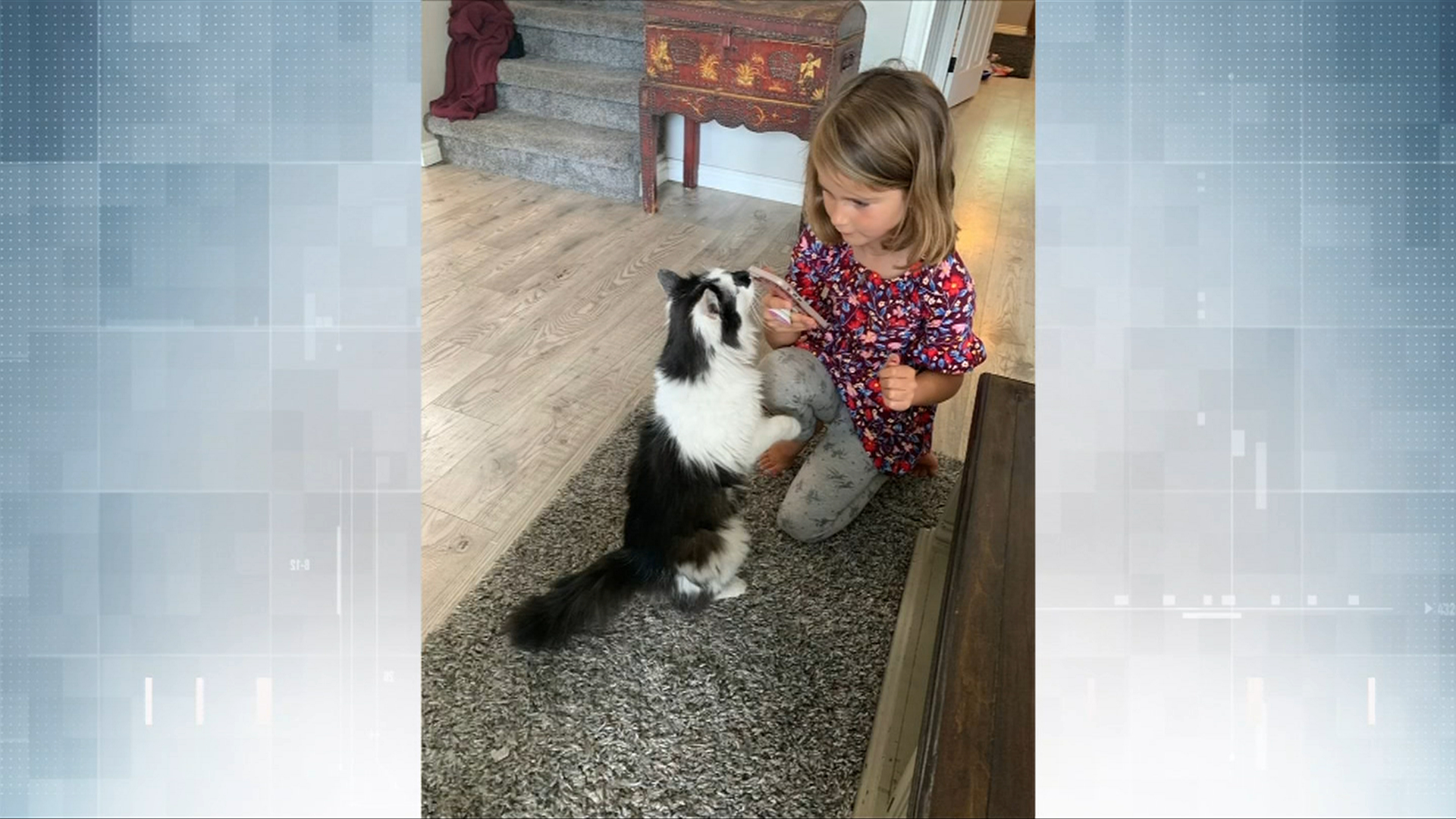 'It was fate:' Lost cat returns home to Colwood after going missing for more than a year